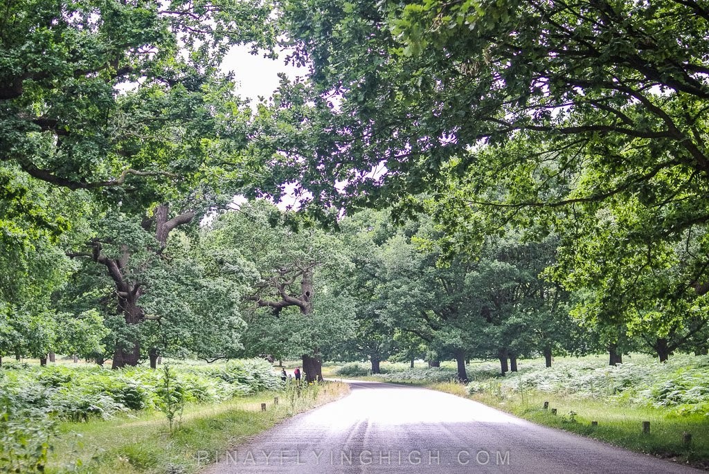Richmond Park, London, United Kingdom - pinayflyinghigh.com-103