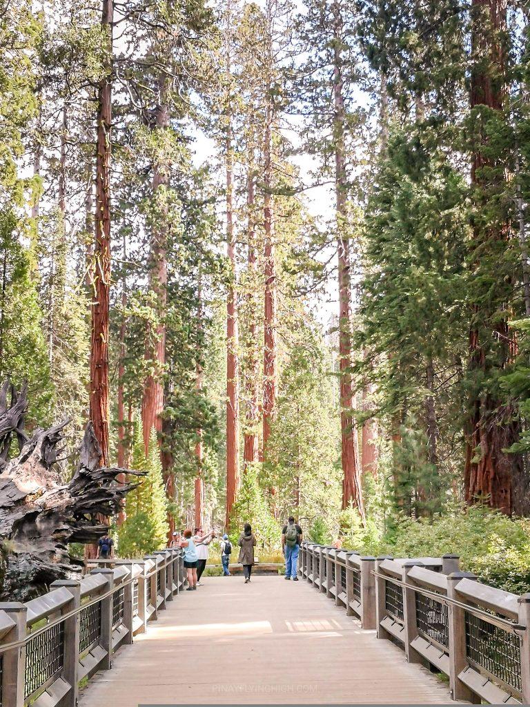 Mariposa Grove, Yosemite National Park, USA