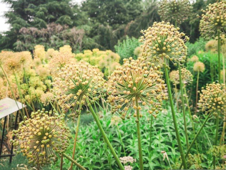 Flowers in Kew Gardens, London, England