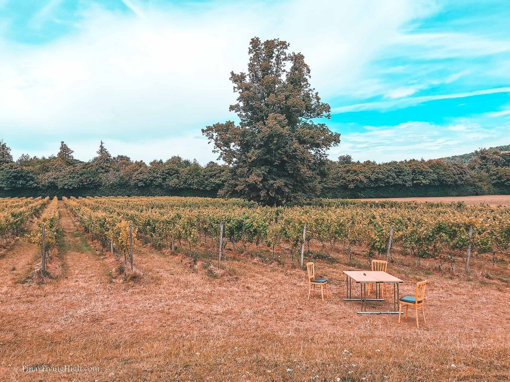 Denbies Wine Estate, Dorking, Surrey, England