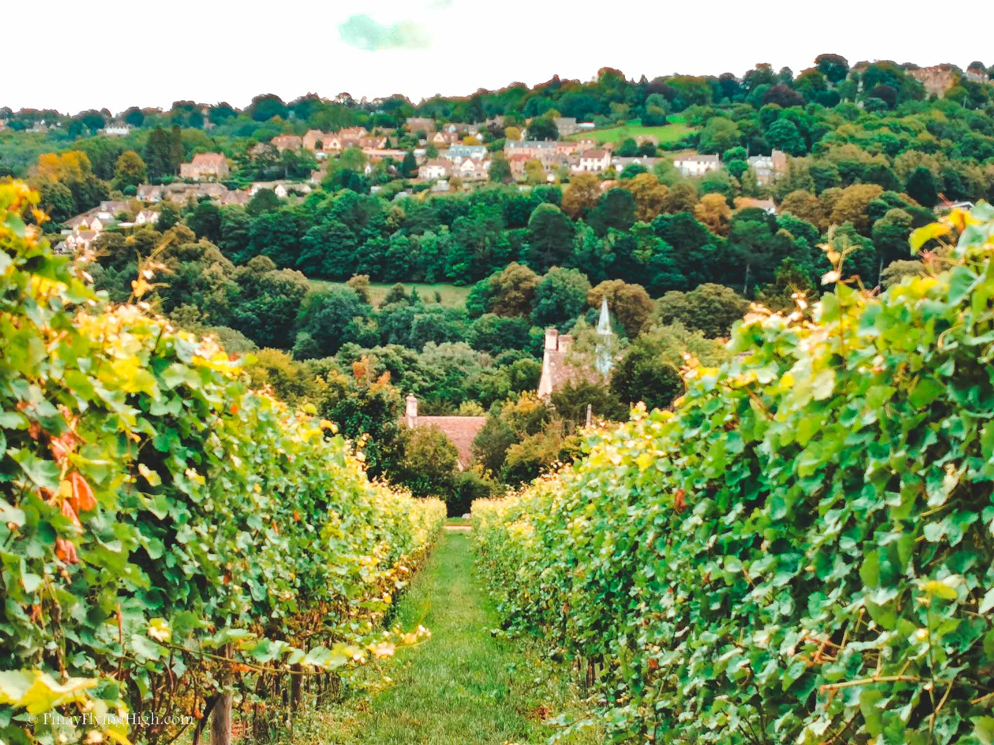 Woodchester Valley Vineyard, Stroud, Cotswolds, England