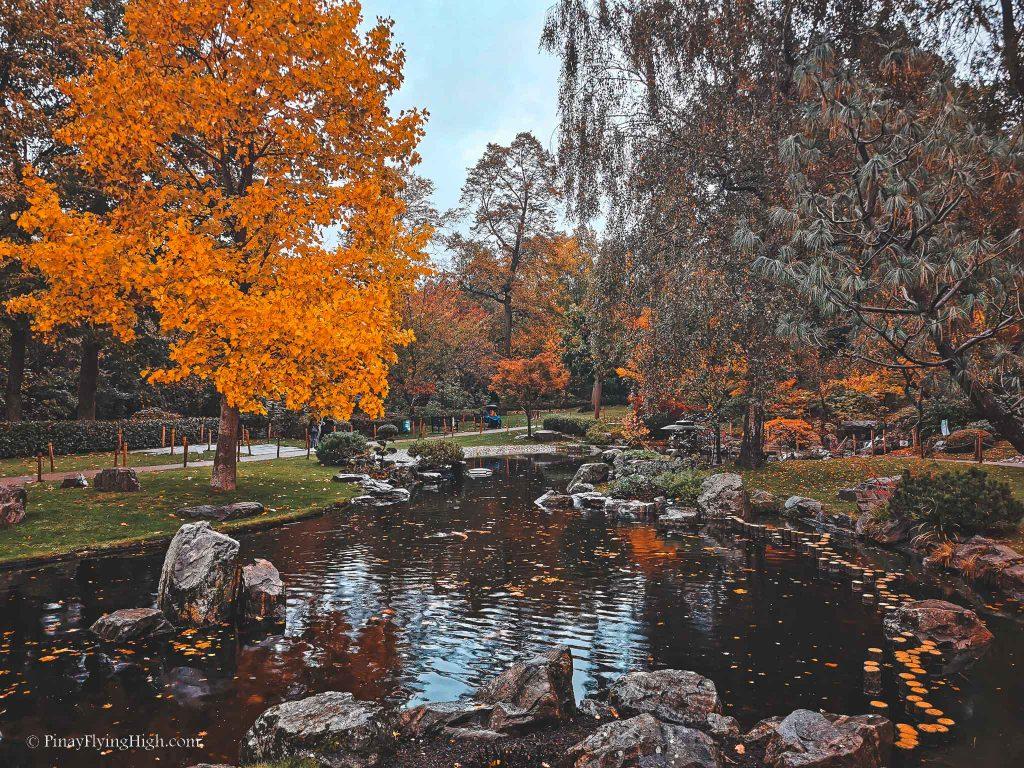 Autumn in Kyoto Gardens, Holland Park, Kensington, London-102